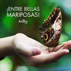 Notas-9-Dic-Mariposa