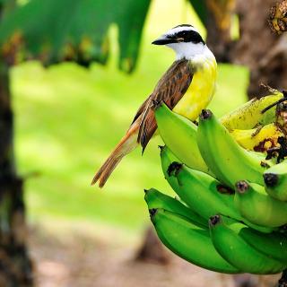 Aves de Costa Rica, un paraíso para el avistamiento de aves