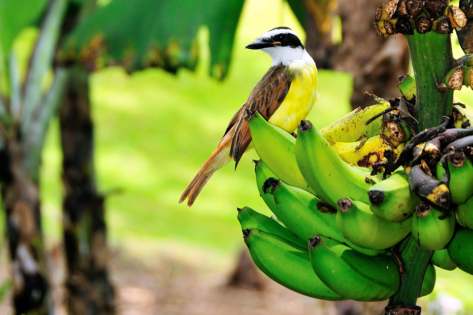 Costa Rica: The birding tour you'll never forget