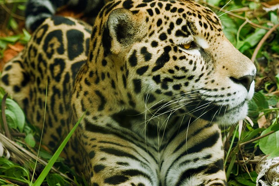 Los 8 animales de Costa Rica que no podrás olvidar