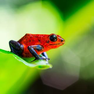 ¿Dónde encontrar 10 animales exóticos de Costa Rica?