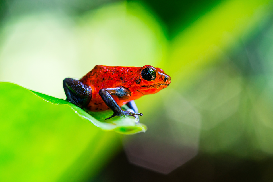 The Top 10 Exotic Animals in Costa Rica