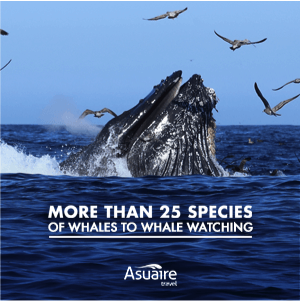 More than 25 species of whales to whale watching