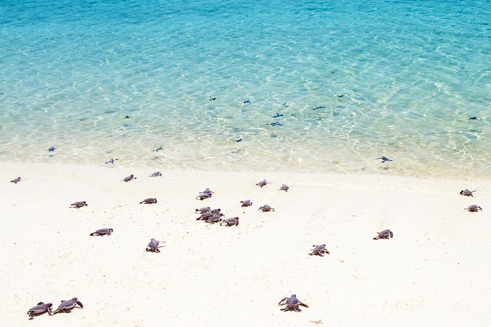 5 Playas perfectas para el arribe de tortugas (infográfico) —