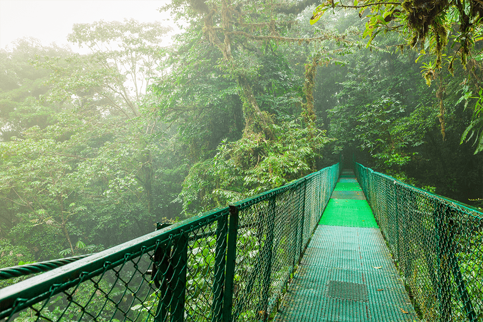 bridge-monteverde