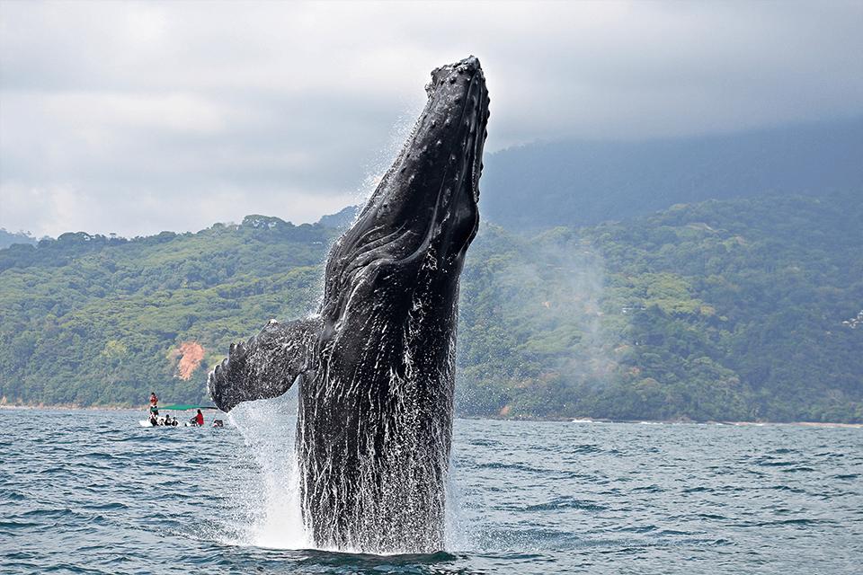 ballena-costa-rica