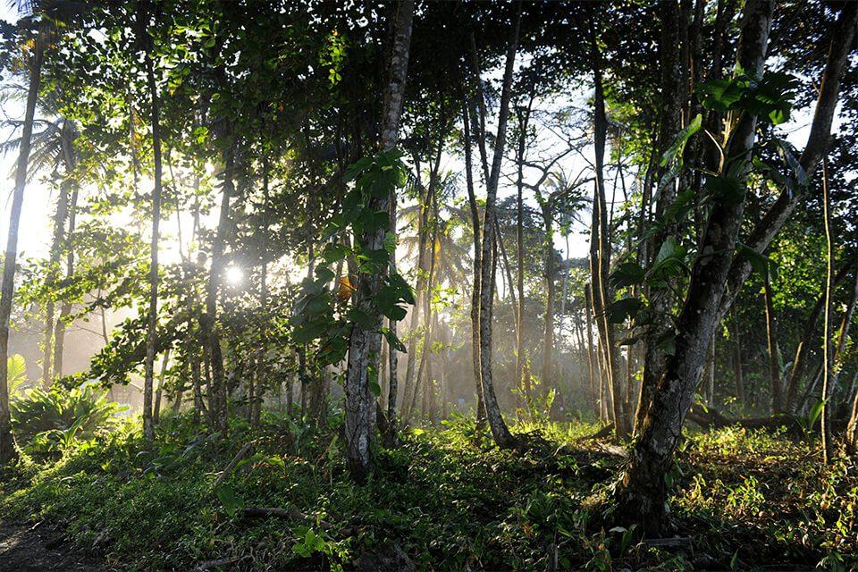 jungla-costa-rica