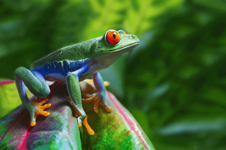 biodiversidad en Costa Rica