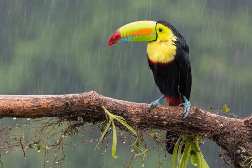 temporada para viajar a Costa Rica