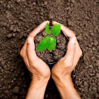plantando-arbol