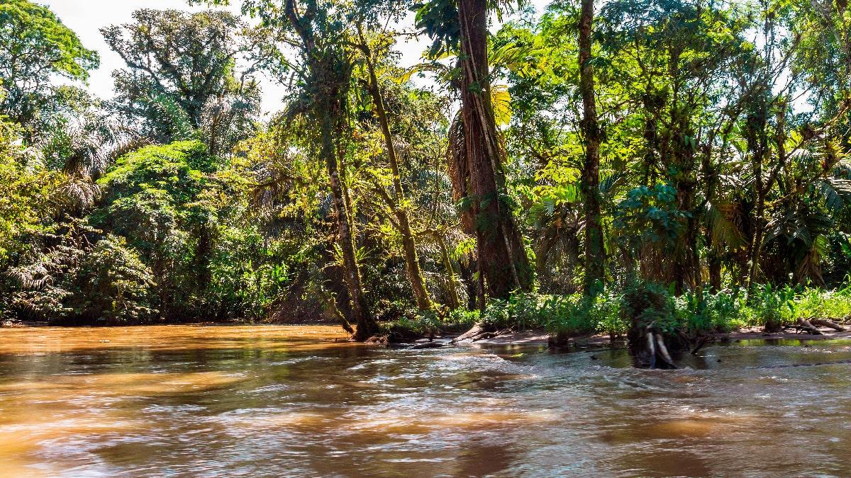 visiting the Tortuguero National Park