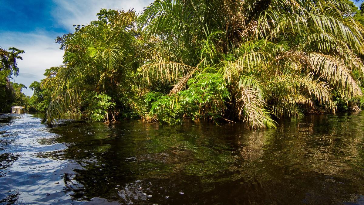 Costa Rican Amazon
