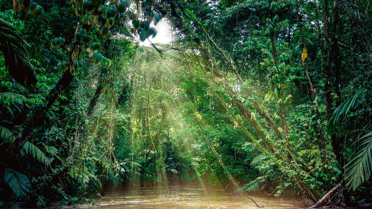 Tortuguero National Park Costa Rica