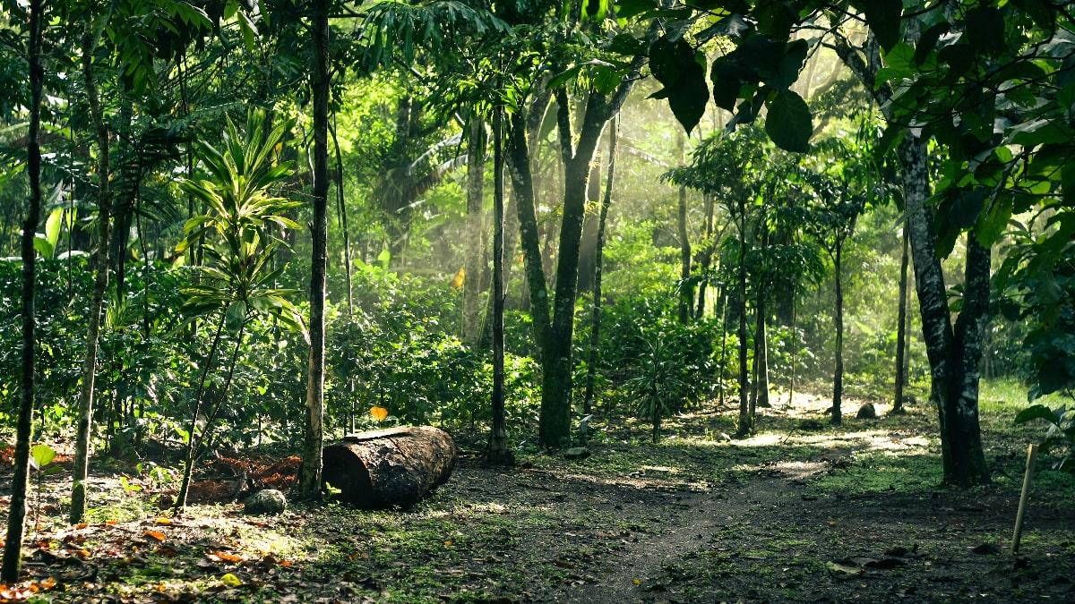 The Pico Bonito Park