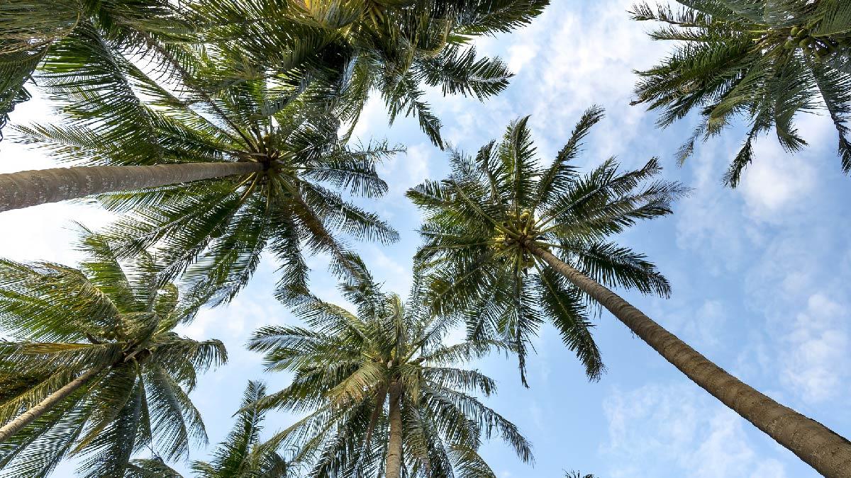 ¿Cuál es la mejor época para viajar a Panamá?