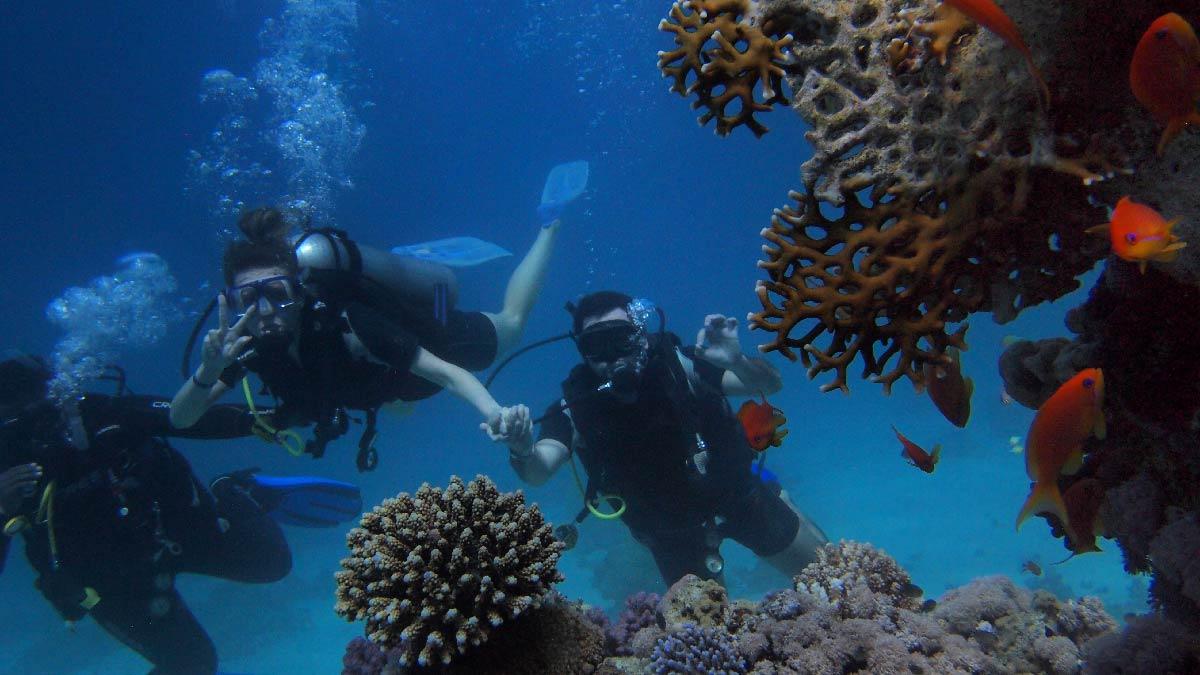 panama corales