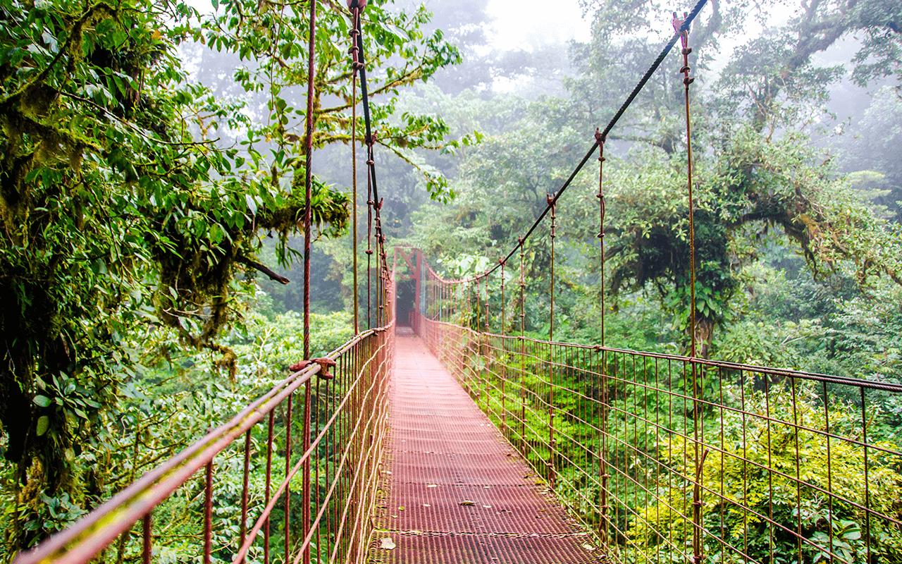 puente colgante monteverde