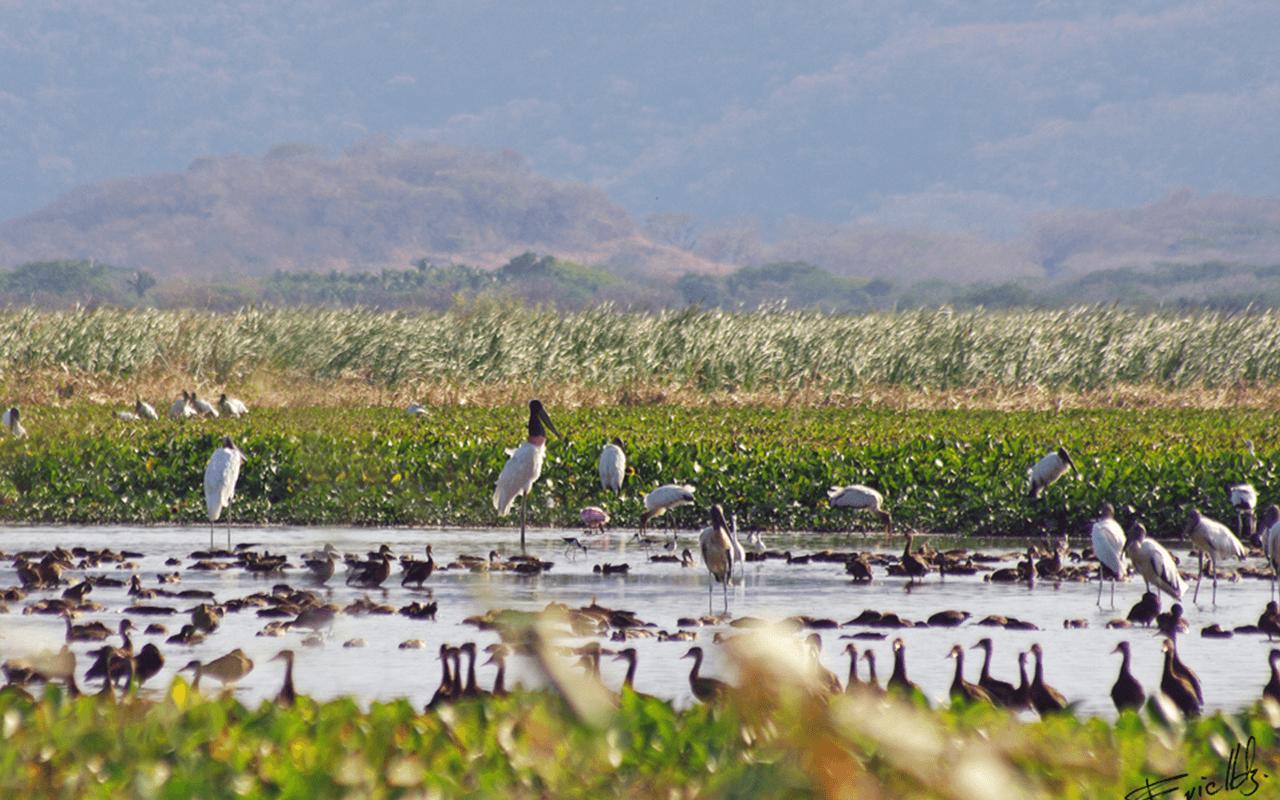 FOTOS SITE COSTA RICA  0008s 0000 wide 1000 09 palo verde wetlands