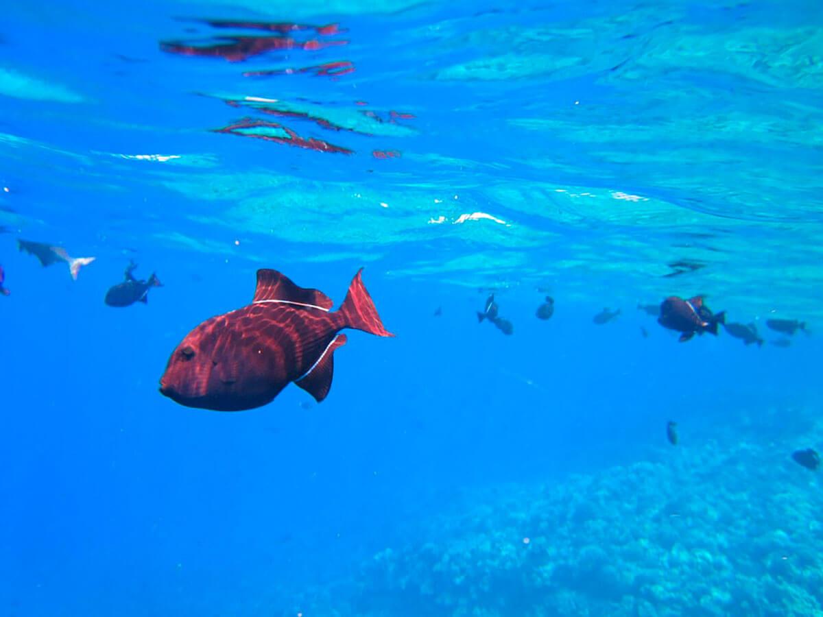 diving_portobelo